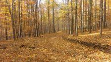 Žltá jeseň