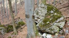 Strom ktorý zastavil balvan