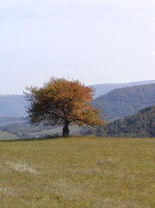 Strom na jeseň