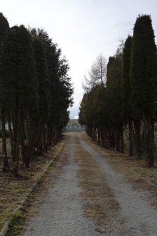alej k cintorínu v Oľšavici