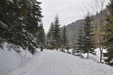 V doline