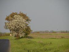 Sama pri ceste