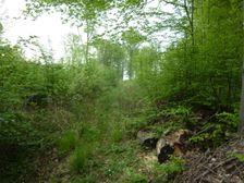 Zarastený lesík