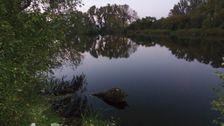 Vajnorský rybník