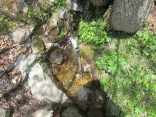 Vodný prameň pri Útulni Limba