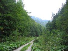 Lubochnianska dolina - koniec asvaltky
