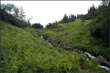 Spád potoka v Krížskej doline pod Chabencom