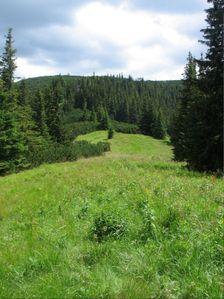Velka Koniarka - Hola v zavere Lubelskej doliny Šusvald - smerom na Opruzlie 1620 m.n.m.