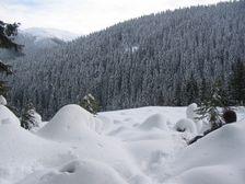 Bor od Pekeleného v zime