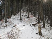Chodník hrebenom na Plešel