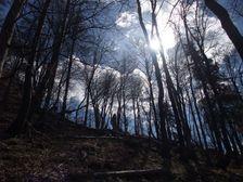 Les pod vrcholom Hrdoša
