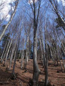 Les pod Hrdošom