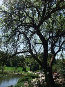 Arborétum Mlyňany SAV
