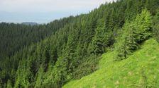 Klacianska dolina od  cez Kozieho gruna