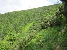 Oprhlie - Kozi grun