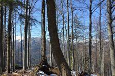 Ostré Brdo 1319m