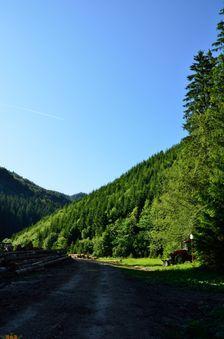 Dedošová dolina, ťažba