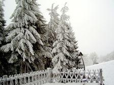 Kojsova Hola