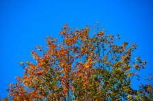 Jesenné odtiene