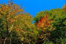 Žarnovická dolina, jesenné odtiene