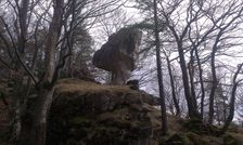 Kojšová - kamenný hríb