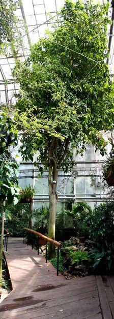 Botanicka zahrada I.