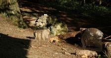 Rákoczyho prameň, žltá značka (Kamenný hrb - Jahodná)